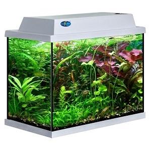akvarium-biodesign-klassik-50