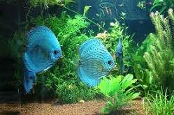 влияние аквариума