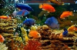польза от аквариума