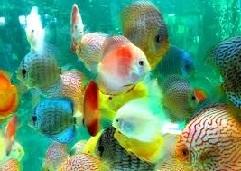 аквариум влияет