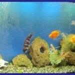 Дизайн аквариума: оформление ракушками