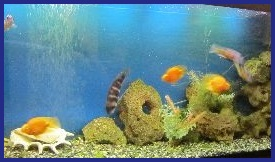 Дизайн аквариума с ракушками. Советы профессионалов