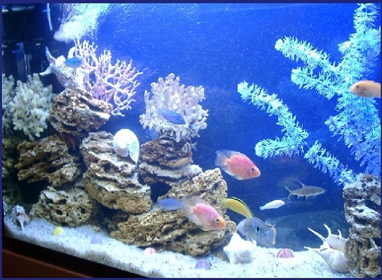 оформление ракушками аквариума