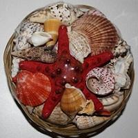 Купить декорации для аквариума: набор ракушек