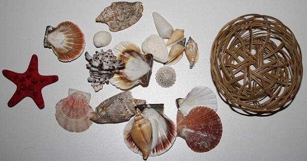 ракушки морские звезды купить в интернет-магазине