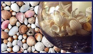 Можно ли ракушки в аквариум?