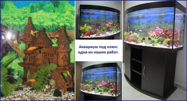 аквариум под ключ заказать в Минске