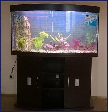 Новая услуга: аквариум под ключ