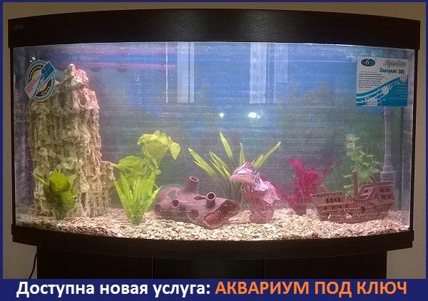 аквариум под ключ