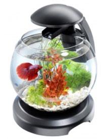 круглый аквариум. Советы аквариумисту