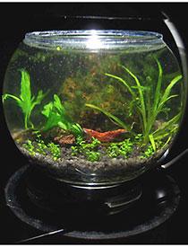 аквариум круглый купить в Минске