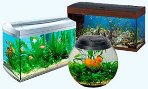 vidy-akvariumov