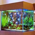 Изготовление аквариумов