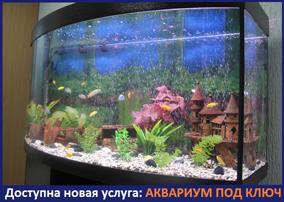 аквариум под ключ заказать