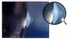 болезни рыбок и их лечение