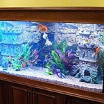 Какой должен быть аквариум?