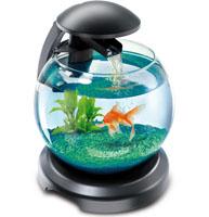 Купить красивый маленький аквариум