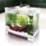 Маленькие аквариумы
