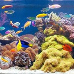 Новые аквариумы