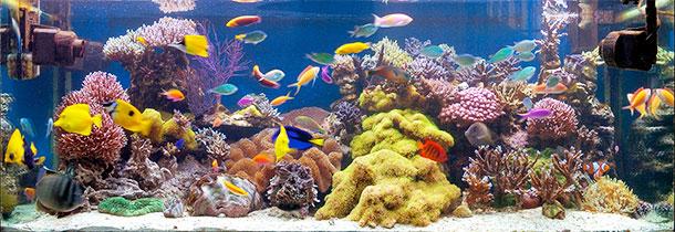 new_akvariums