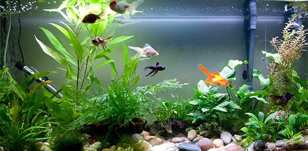 Общие аквариумы