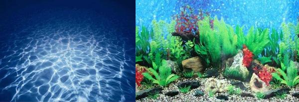 купить Фон для аквариума Barbus Background 19/63