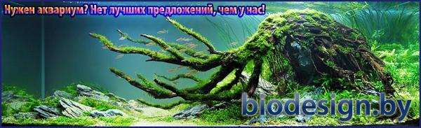 Купить аквариум в Минске в интернет магазине аквариумов