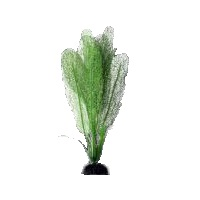Искусственное шелковое растение Апоногетон мадагаскарский белый для декорирования аквариума