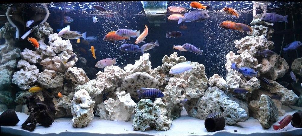 Кенийский камень для аквариума дизайн купить