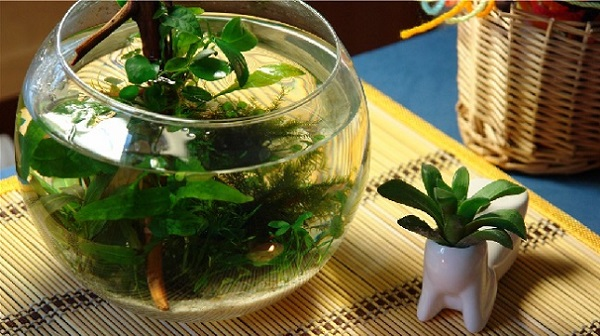 купить круглый аквариум в Минске, Бресте и других городах Беларуси