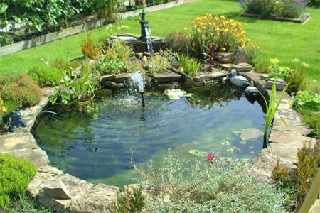 водоросли в пруду средства для пруда купить