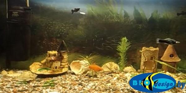 Оборудование и запуск аквариума