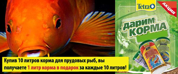 Корм для прудовых рыб Тетра в подарок