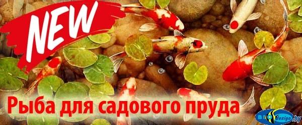 Рыба для садового пруда