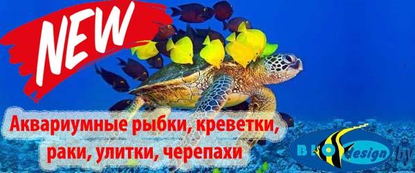Аквариумные рыбки, креветки, раки, улитки, черепахи