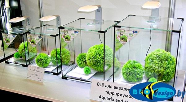 купить Аквариум Biodesign Q-Scape 10 в Минске