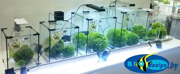 купить Аквариум Biodesign Q-Scape 6.5 в Минске