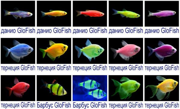 ГЛОФИШ, яркие светящиеся рыбки, флуоресцентные рыбки, GloFish 6 шт.